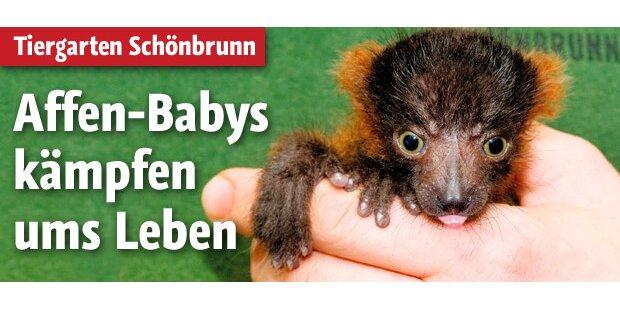 Affen-Babys kämpfen ums Überleben