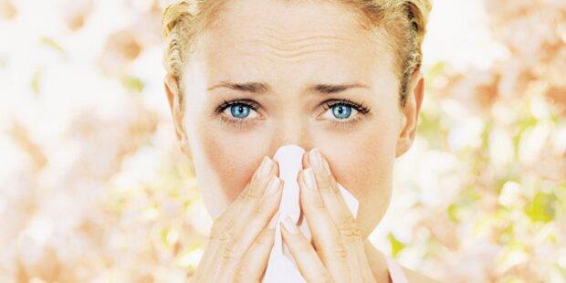 Pollensaison wird kurz und heftig