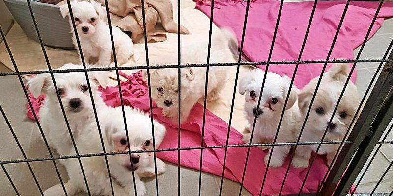 An Österreich-Grenze: 17 Hunde-Welpen vor Tiermafia gerettet