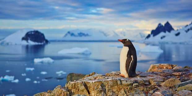 Klima-Alarm: 17° in der Antarktis