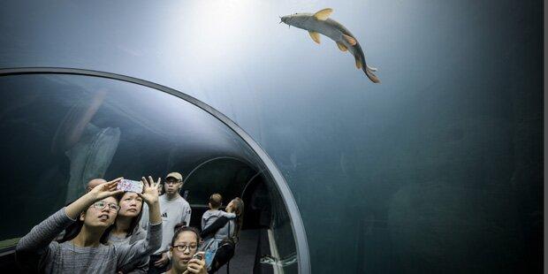 So spektakulär ist das neue Riesen-Aquarium mitten in Europa