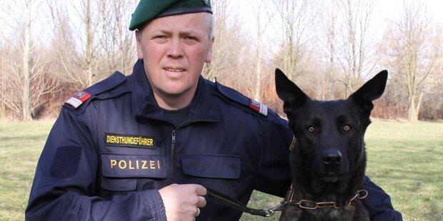 Dieb geht sprichwörtlich baden - Polizeihund findet ihn trotzdem