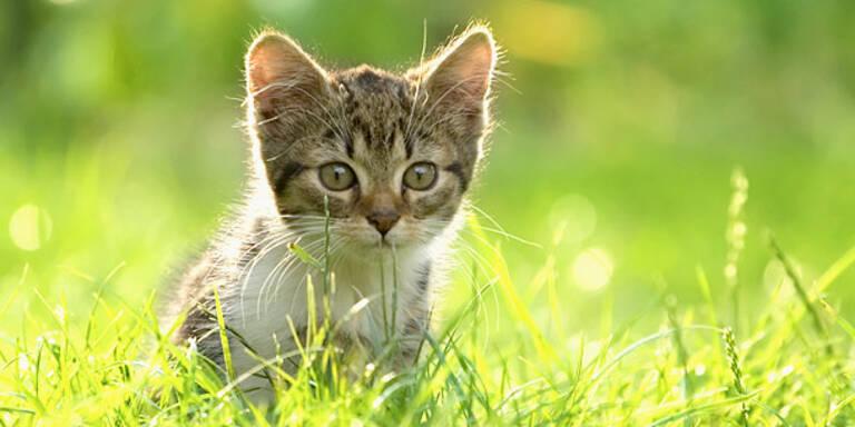 Katzen auf mysteriöse Weise verschwunden