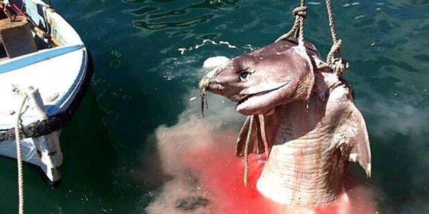 Rätsel um Hai-Bestie auf Mallorca