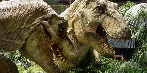 Opa des Tyrannosaurus Rex entdeckt