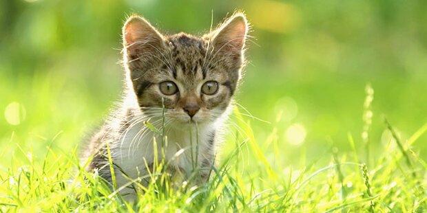Welttag der Katzen