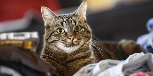 Familienstreit: Slowake erschlägt Hauskatze