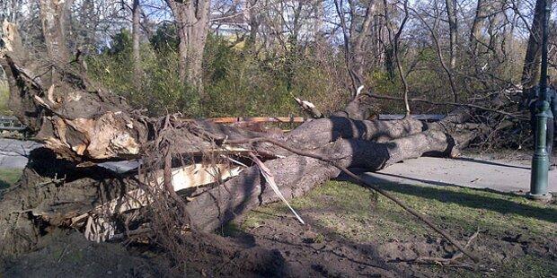 Todes-Sturm: Joggerin von Ast erschlagen