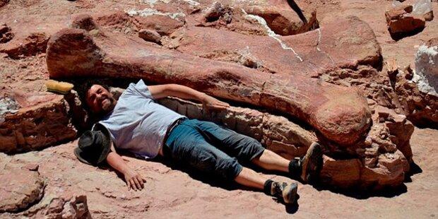 Größter Dinosaurier aller Zeiten entdeckt