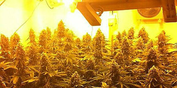 64 Cannabispflanzen bei Student sichergestellt