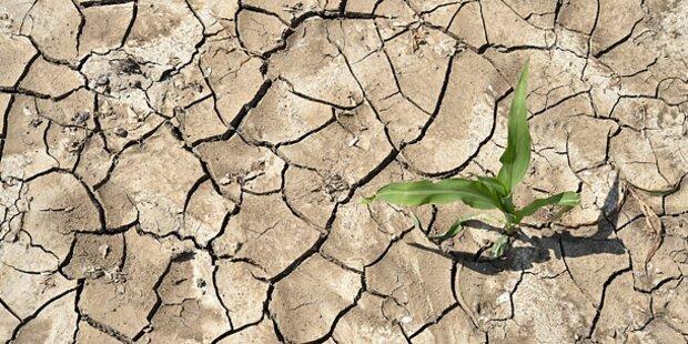 Forscher warnen: Klima steht vor dem Kollaps