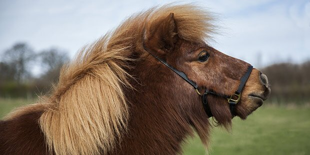 Grausamer Tierquäler tötet zwei Ponys