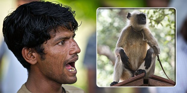 Schauspieler sollen Affenplage bekämpfen