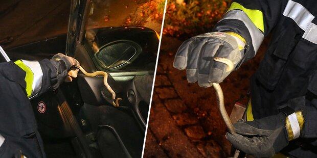 Schlange kroch während Autofahrt aus Lüftung