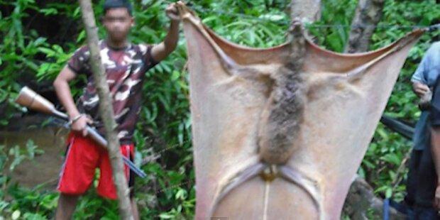 Foto zeigt größte Fledermaus der Welt