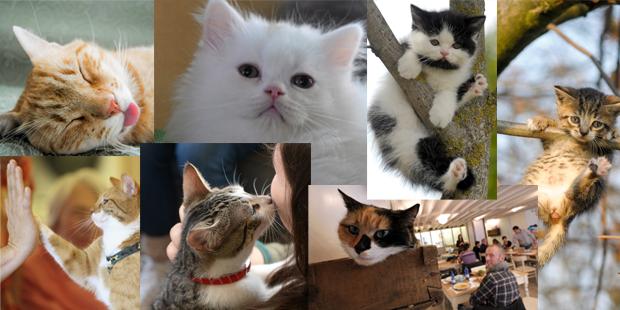 ÖSTERREICH sucht die süßeste Katze