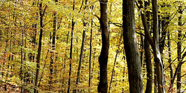 Auch Potenzial forstlicher Bioenergie ist begrenzt