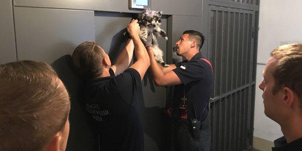 Wien: Hund blieb mit Leine in Lift hängen