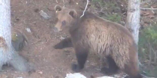 Amateurvideo zeigt Bär M13 aus der Nähe