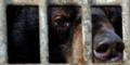Unsere Tiere - Tierschutz-CH - Vier Pfoten, Bären, Vietnam, Nahaufnahme - 960x480
