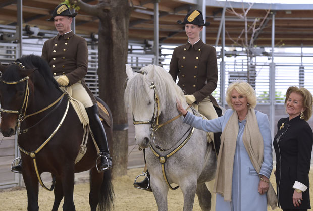 Herzogin Camilla in der Spanischen Hofreitschule