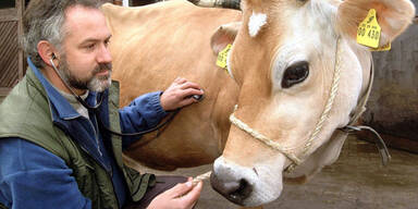 Schock: Neuer Fall von Rinderwahnsinn diagnostiziert