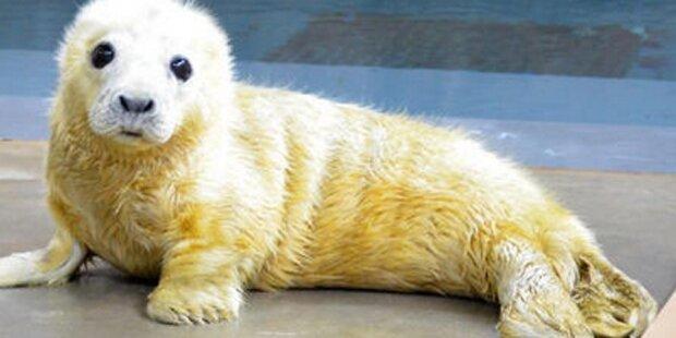 Twitter-Wettkampf: Wer hat das süßeste Zoo-Baby?