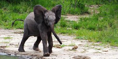 Tschüss Babyelefant: Abstandsverletzungen werden nicht mehr gestraft