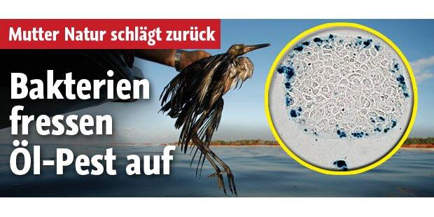 Bakterien fressen Öllteppich auf