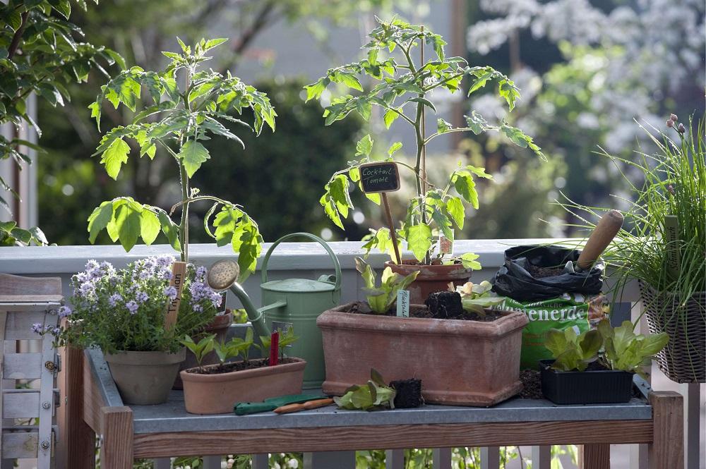 Balkongarten - Garten-CH - Bild 2