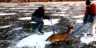 """""""Bambi"""" auf Eis gefangen: Rührende Rettung"""