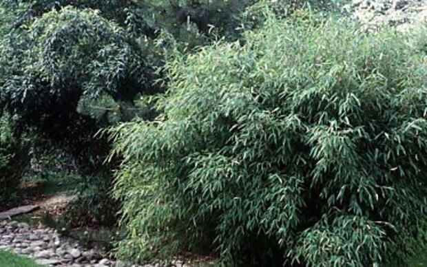 Pflanzen mit Ausläufern gezielt platzieren