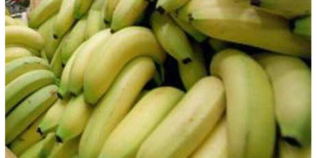 20 kg Drogen statt Bananen in Kiste