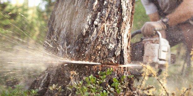 56-Jähriger bei Forstarbeiten von Wurzelstock erdrückt