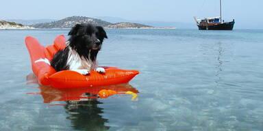 Hundewahl - Benji, 10 Jahre