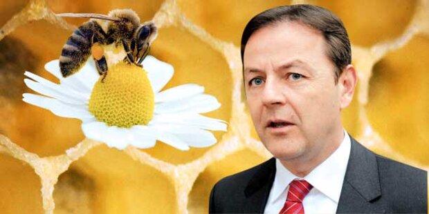 Gift tötete 8 Milliarden Honig-Bienen