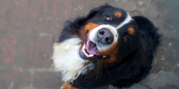 Brutalo-Oma würgt Hund & attackiert Herrchen