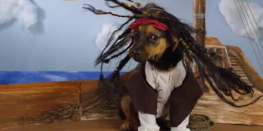 Hundewelpen im Disney-Gewand