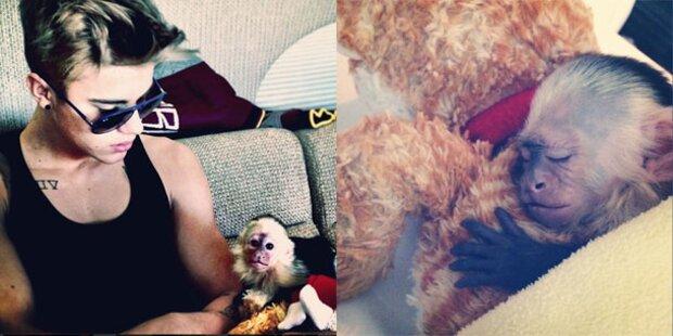 Justin Biebers Affe beschlagnahmt