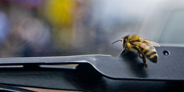 Biene löste Crash in Eisenstadt aus