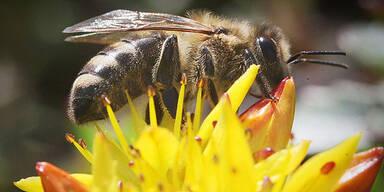 BASF klagt gegen Pestizid-Verbot