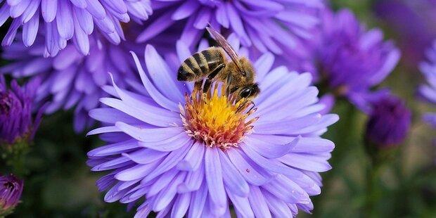 Ohne Bienen gibt es kein Leben