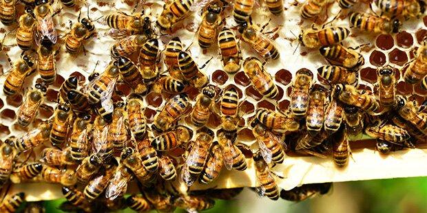 Bis zu 800 Nistplätze für Wildbienen