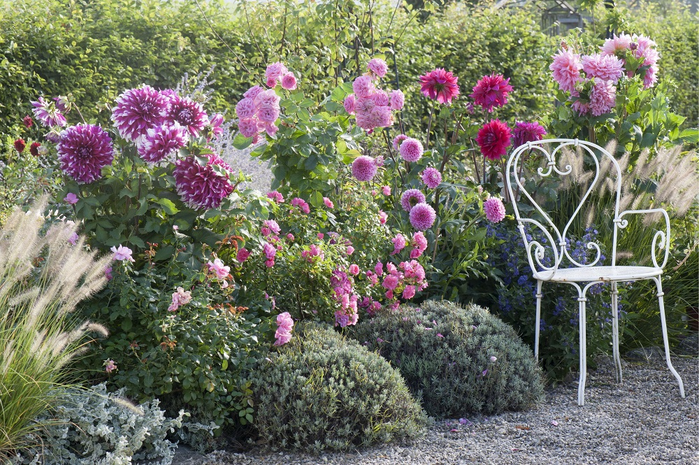 Blühende Beete - Garten-CH - NaturLust #13 - Seite 25