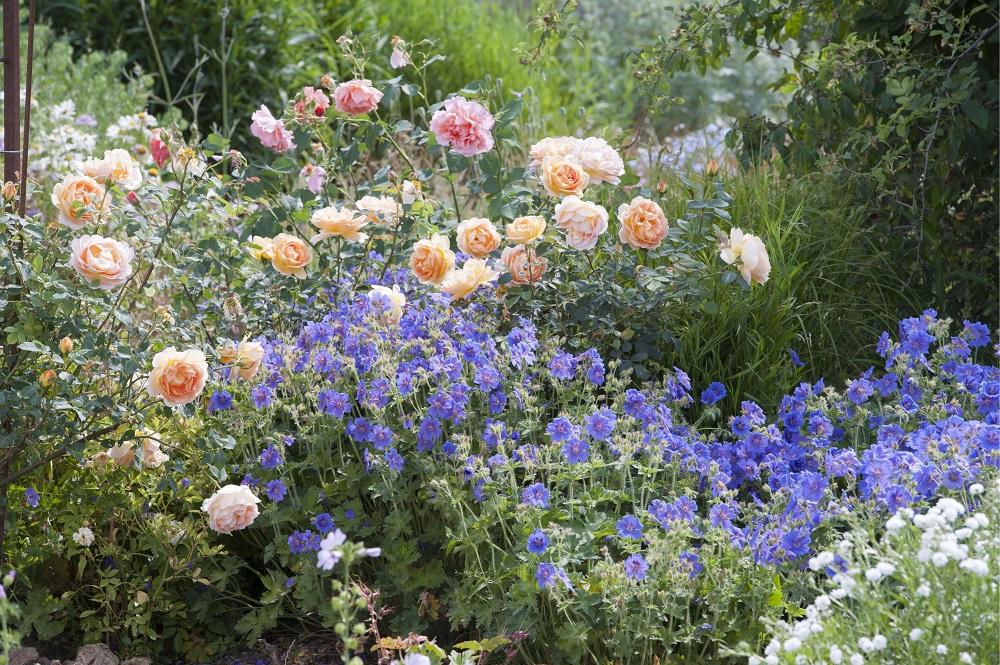 Blühende Beete - Garten-CH - NaturLust #13 - Seite 26 - 1