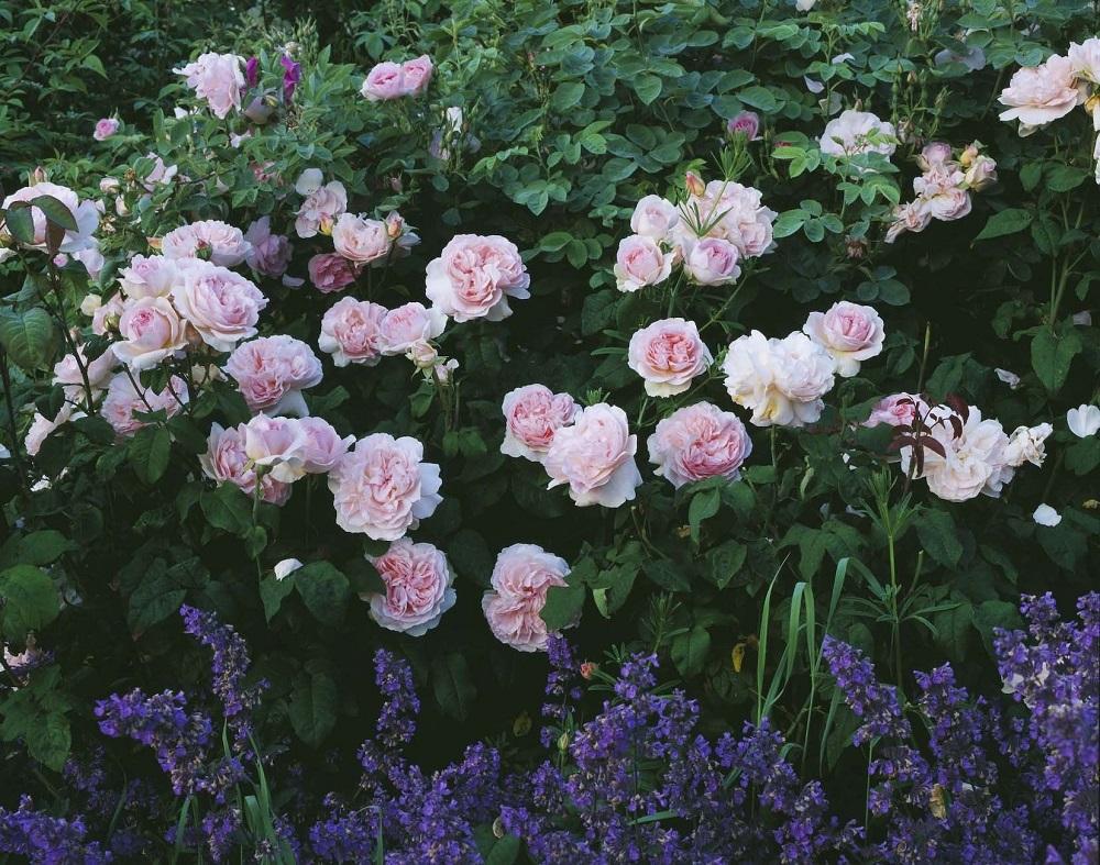 Blühende Beete - Garten-CH - NaturLust #13 - Seite 26 - 2