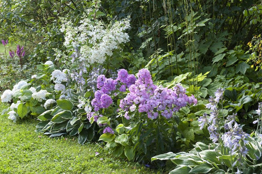 Blühende Beete - Garten-CH - NaturLust #13 - Seite 26 - 3