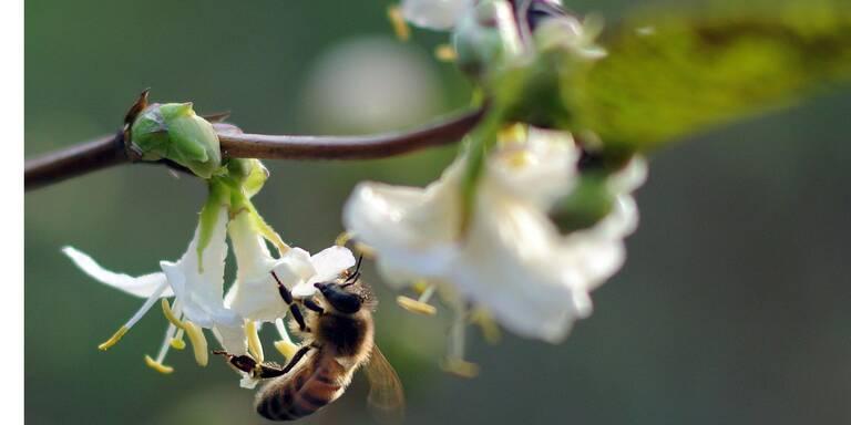 Erste Pollenbelastung in diesem Jahr