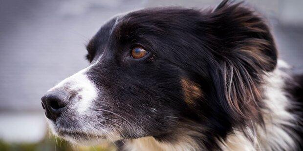 Hund biss Dreijährige ins Gesicht