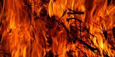 Feuer, Brand - Tierschutz-CH - Brasilien